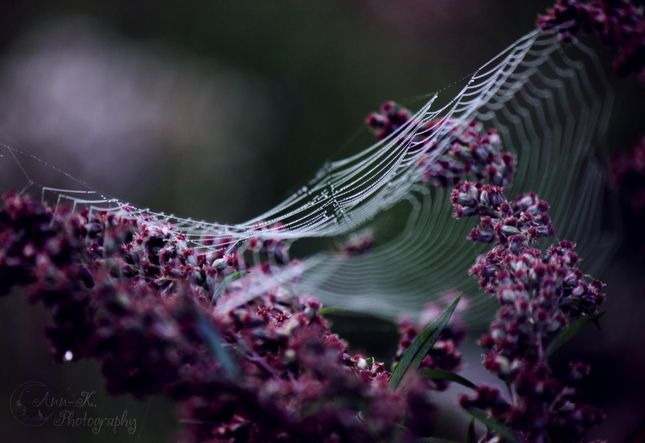 Spinnennetz by Feenmond