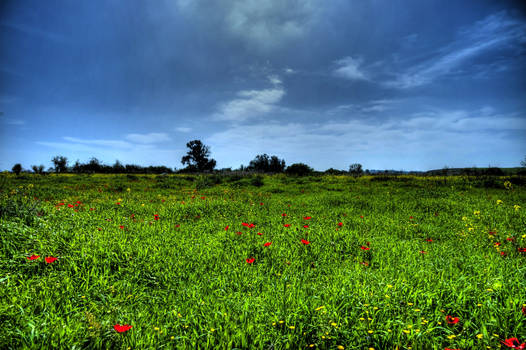 Anemones on  HDR