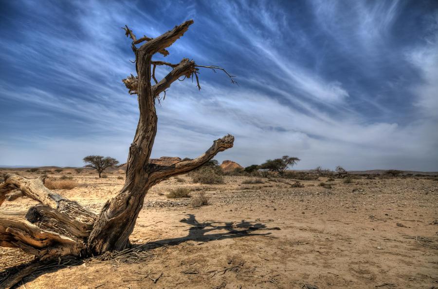 Dryness by haimohayon