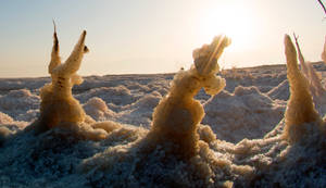 Salt dogs