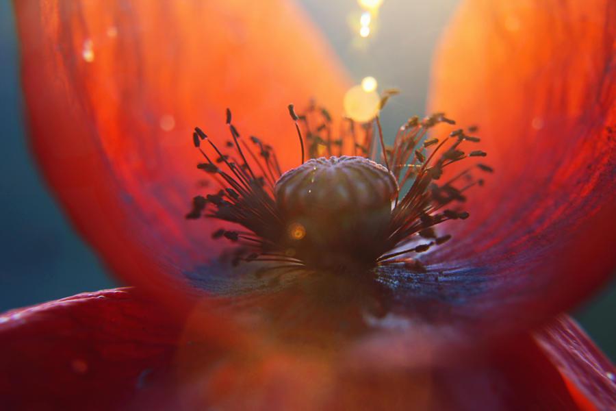 beautiful flower by Herzlich-t