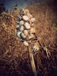 Snails on a Stick.
