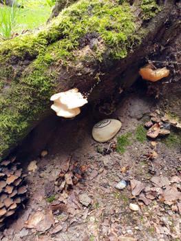 Munnen Stone at Posbank