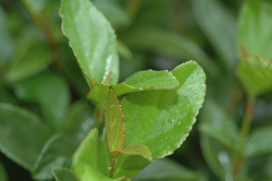 spining leaf by zinor62