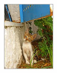 Street cats 7