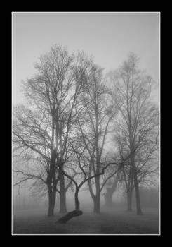 Foggy park in autumn