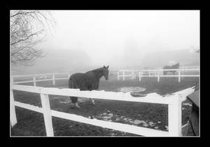 A foggy day with horses