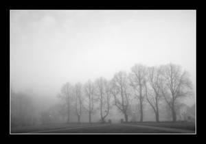 A foggy day
