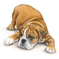 bulldog by adalwolfa-online