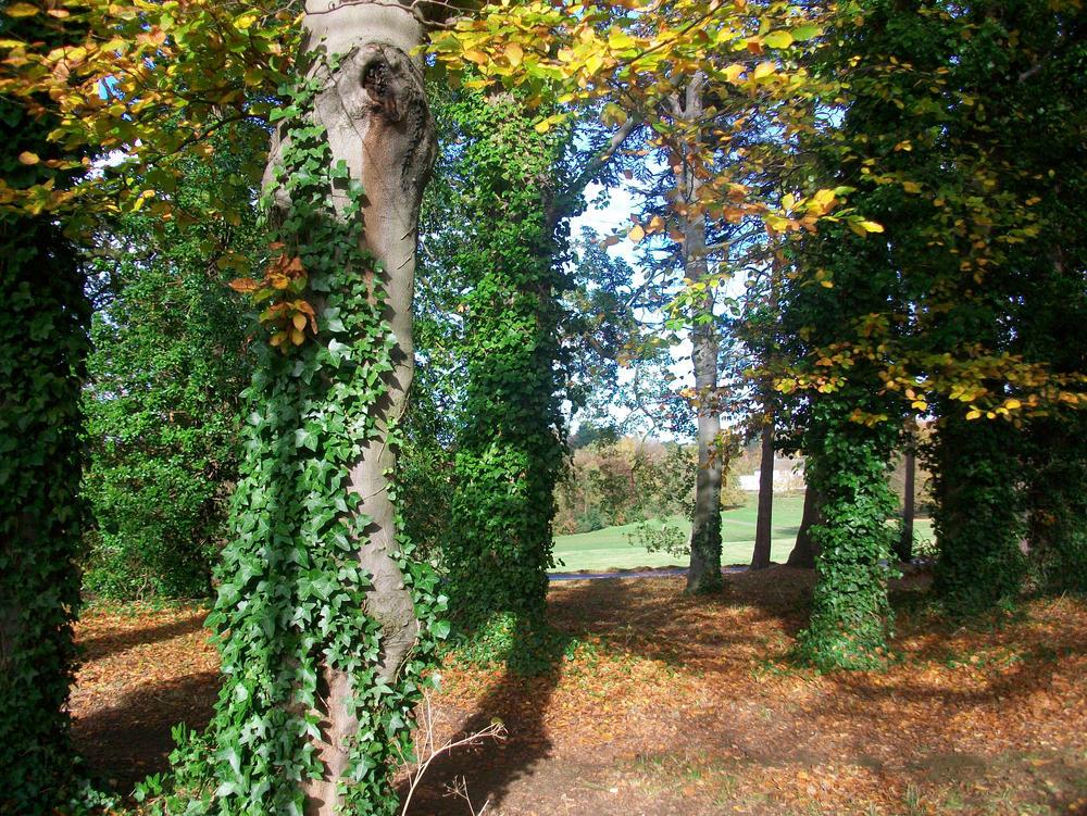 Secret wonders in Autumn
