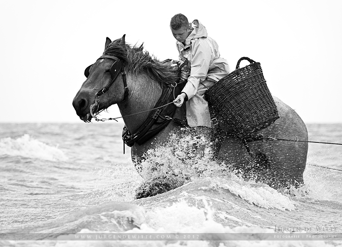 Shrimp Fishing on Horseback by JurgendeWitte