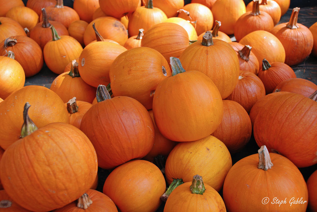 Pumpkins 2 by StephGabler
