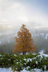 Fall Greets Winter by StephGabler