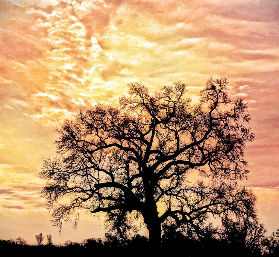 Orange Sunset by StephGabler