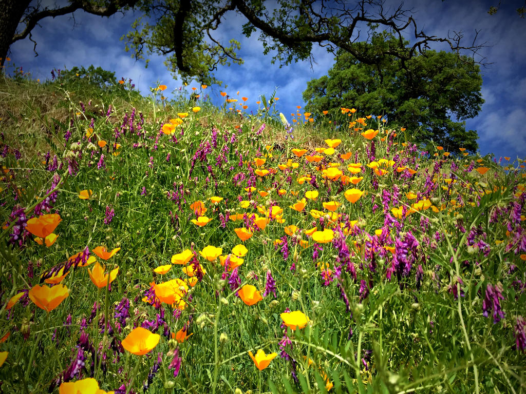 Wildflower Mountain by StephGabler
