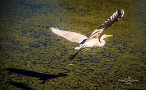 Taking Flight by StephGabler