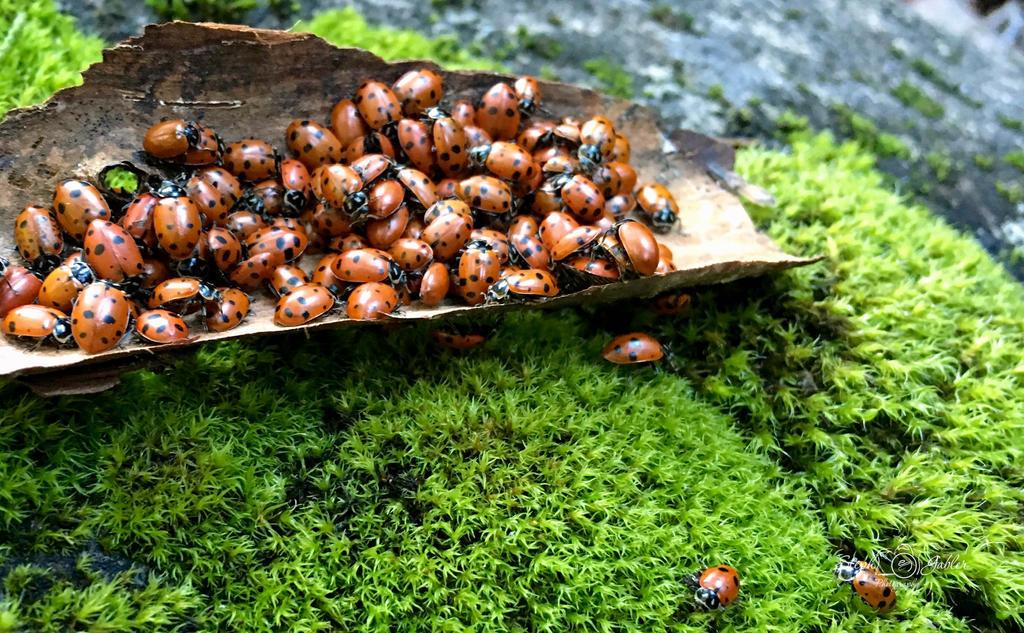 Ladybug III by StephGabler