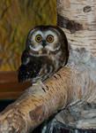 Teeny  Tiny Owl