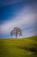 Spring Oak by StephGabler