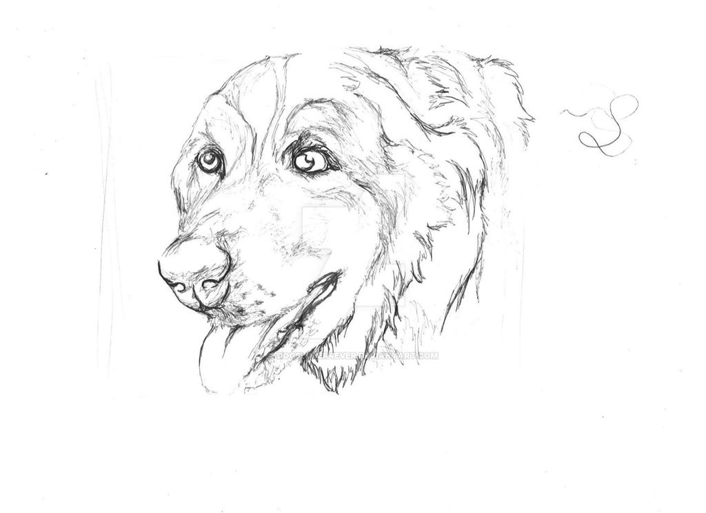 Contour Line Drawing Of A Dog : Contour drawing of my puppy d by dogsluver ever on deviantart