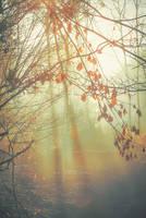 Morning by Ikonokl4st