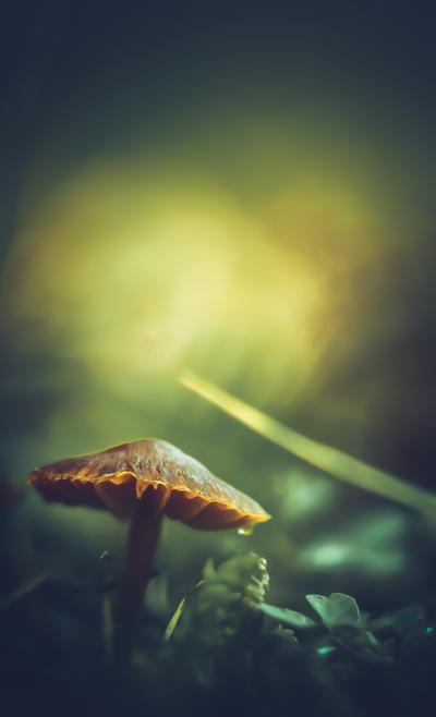 Fongus Autumnus by Ikonokl4st