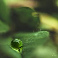 Perles de pluie... by Ikonokl4st