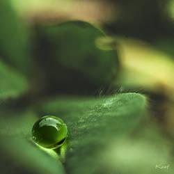 Perles de pluie...