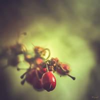 Regain... by Ikonokl4st