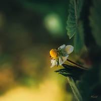 Le soleil dans un baiser... by Ikonokl4st