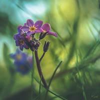 Efflorescence... by Ikonokl4st