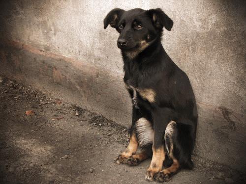 Shelter Puppy by frecklydog