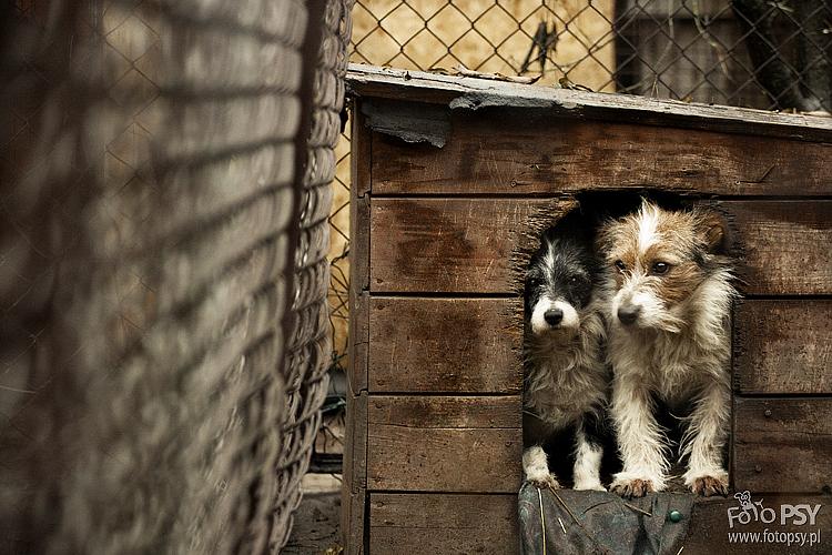 fotoPSY.pl wspierają bezdomne zwierzęta