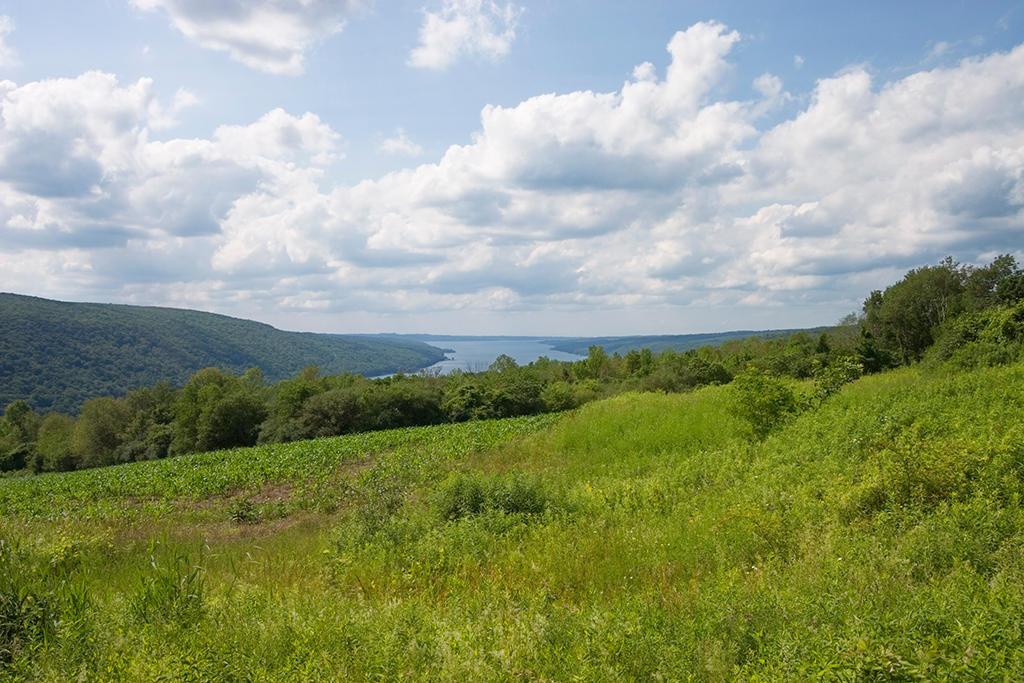 Lake View by BillH-Photo