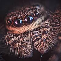 Spider Portrait by Pete1987