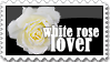 white rose by crazykira-stamps