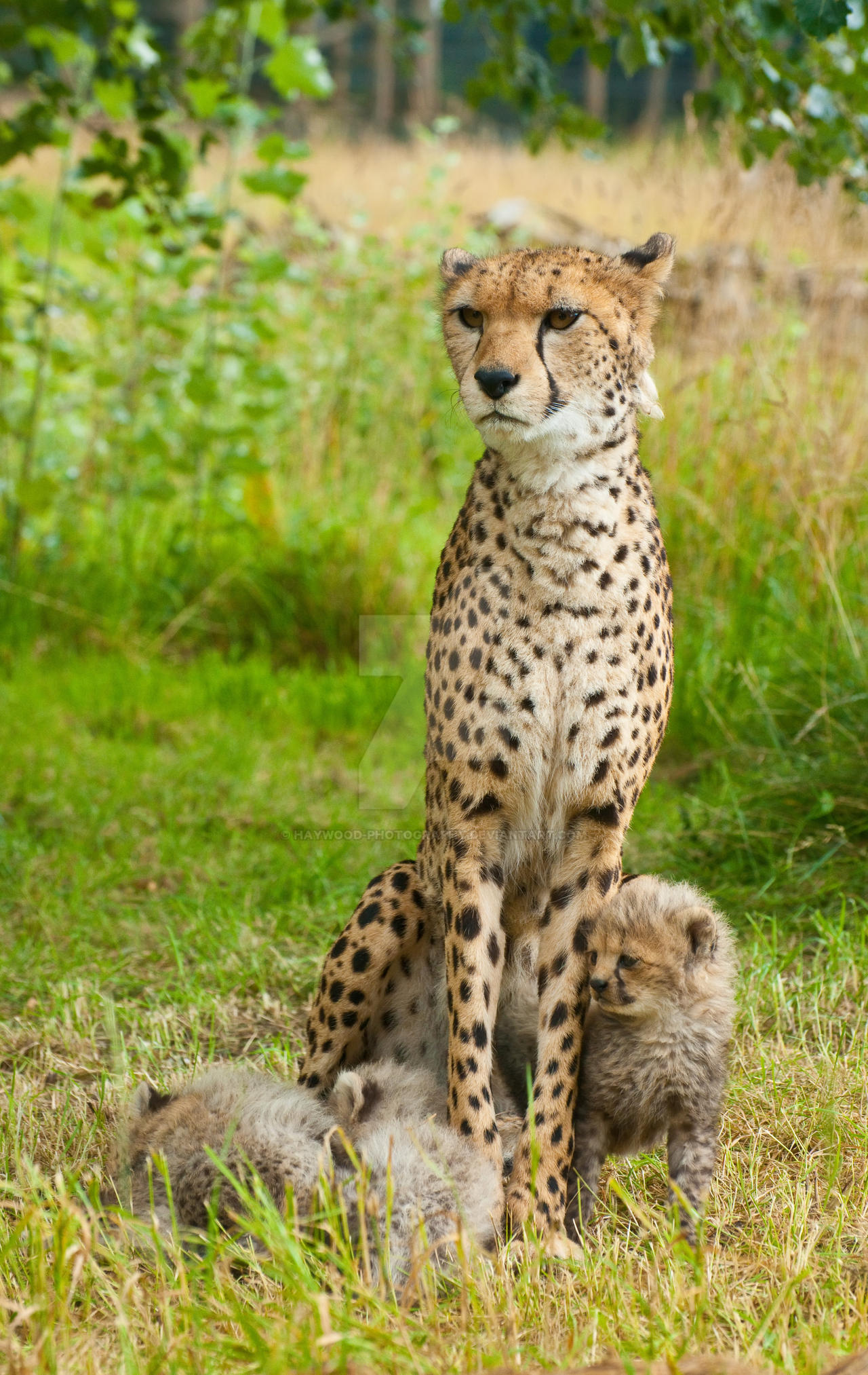 KT and Cubs 271-11A by Haywood-Photography