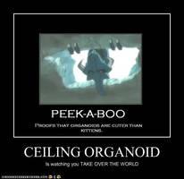 Ceiling Organoid