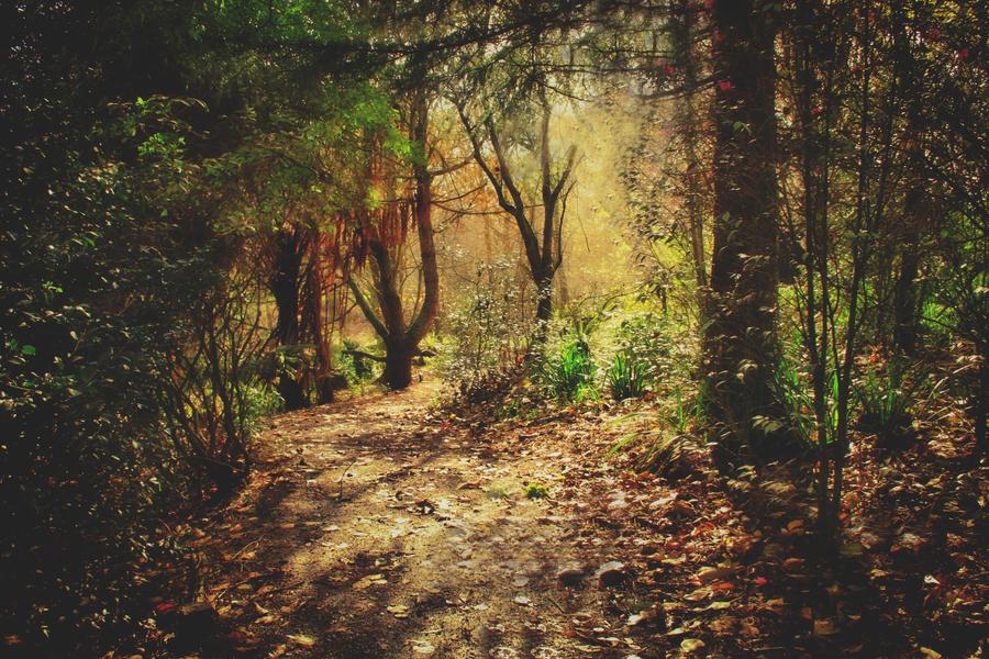Enchanted Forest by CathleenTarawhiti