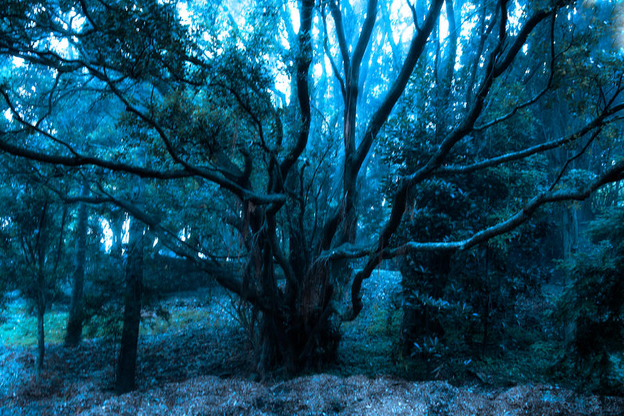 Gnarly tree by CathleenTarawhiti