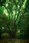 Gnarly tree 2