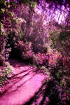 Enchanted forest 6