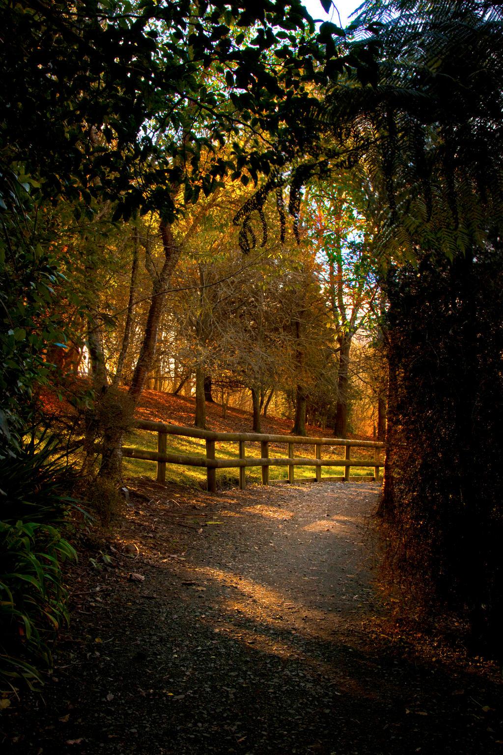 Enchanted forest 7 by CathleenTarawhiti