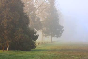 Foggy morning by CathleenTarawhiti