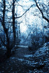 Enchanted Forest 7