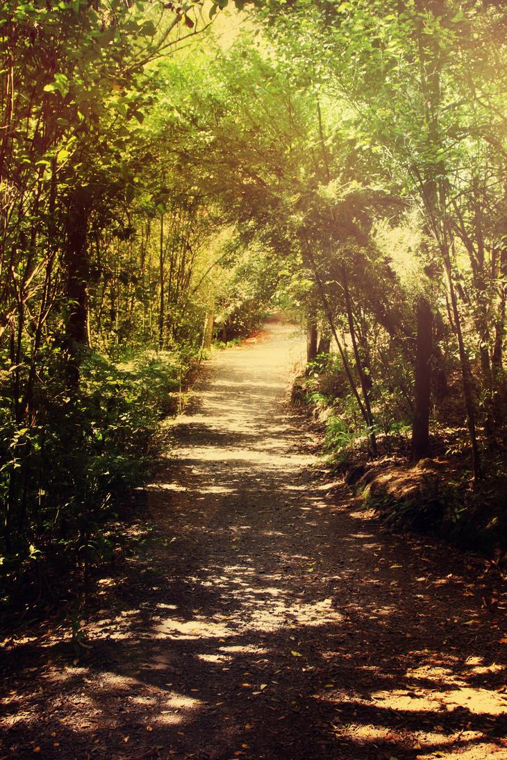 Enchanted Forest 8 by CathleenTarawhiti