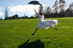 Danielle umbrella 6
