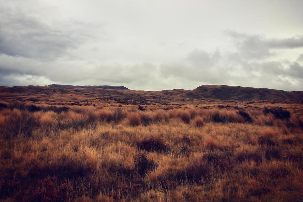 Tussock land