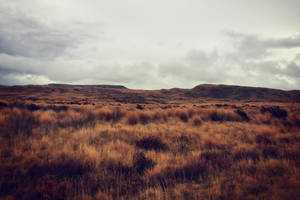 Tussock land by CathleenTarawhiti