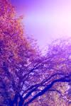 Purple tree stock